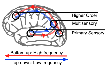 Multisensory Integration